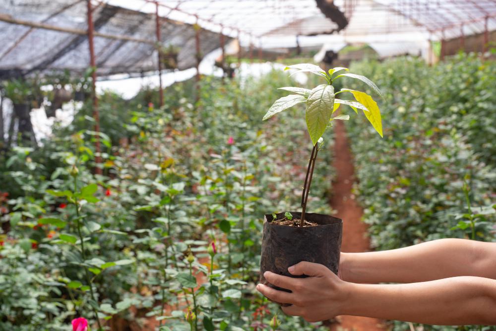 Imagem de pessoa segurando muda de planta